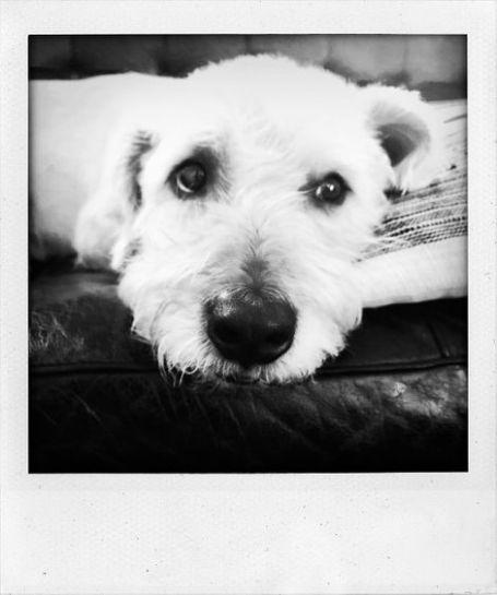 Charlie Oldman pets