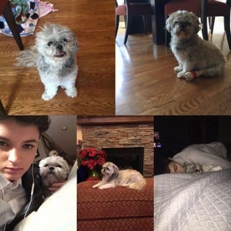Isabella Emmack pets